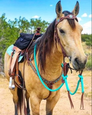 "Andrea Equine turquoise horse tack set!! Featuring the ""Sascha"" browband headstall, ""California"" snaffle bit, turquoise loop reins, and matching slobber straps #FindYourTackGoals #AndreaEquine #TurquoiseTack"