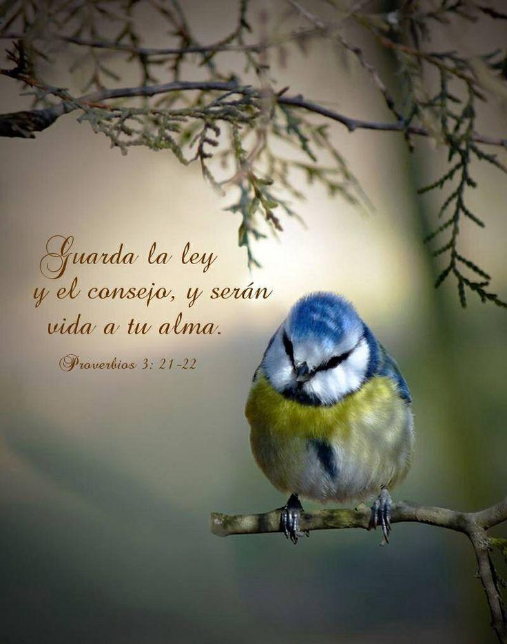 Proverbios 3:21,22