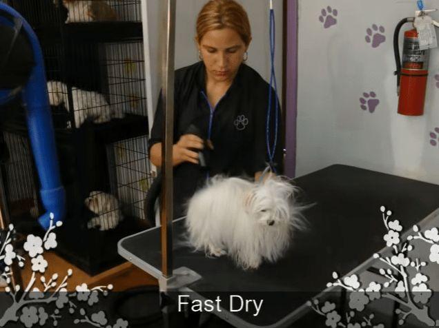 Malteser Hund Pflege Blog Seite 2 Von 3 Tipps