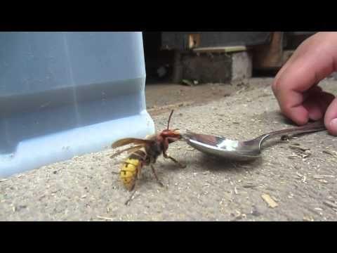 Imker-Häck 02: Wir bauen eine Wespenfalle - YouTube