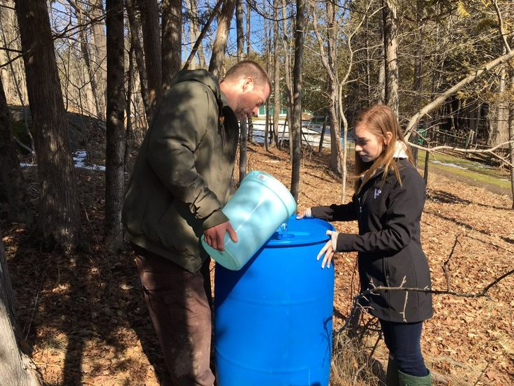 """PlanetBlueAdv (Parm) on Twitter: """"Harvesting sap from #mapletrees for boiling & producing maple syrup @Viamede & tasting maple toffee @pktourism https://t.co/koOSfU97Nz"""""""