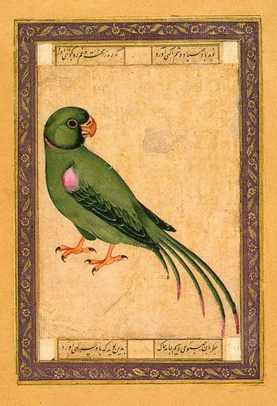 Parrot Album of Polovtsov Gouache. 14.2x10.5 cm Iran. 18th century Source of Entry: Museum of the Stieglitz School (formerly in the collection of A.A. Polovtsov). 1924 Leningrad
