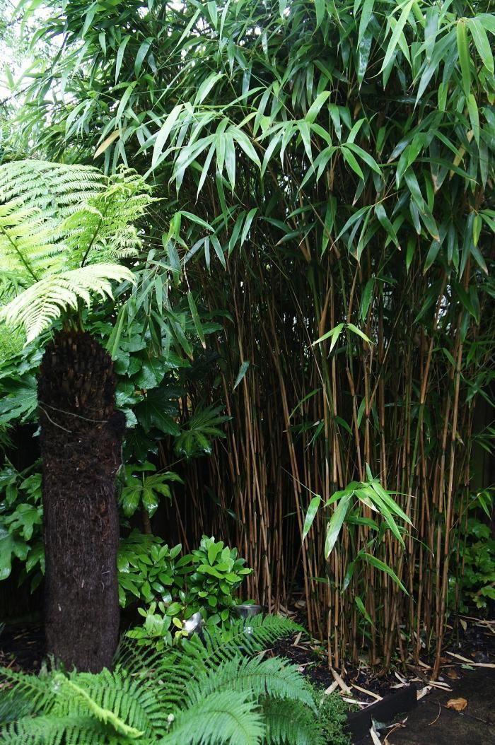 Bamboo provides a canopy for the ferns.