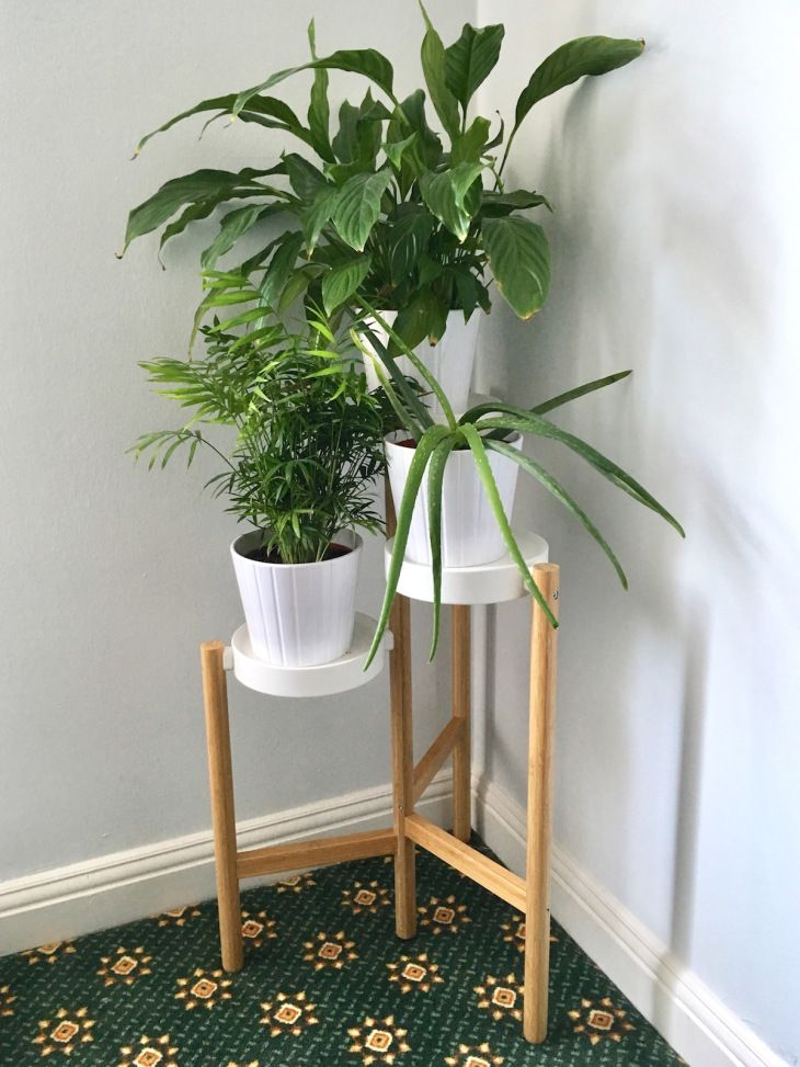 Best 25 satsuma ikea ideas on pinterest ikea new series for Ikea plantes