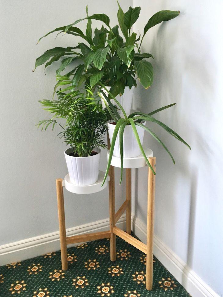 As 25 melhores ideias de satsuma ikea no pinterest - Plantas interior ikea ...