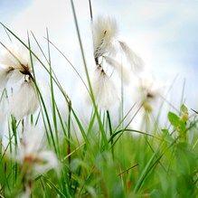 ixxi image bank hollandse hoogte photography vincent van den hoogen spring summer grass flowers interior wall decoration