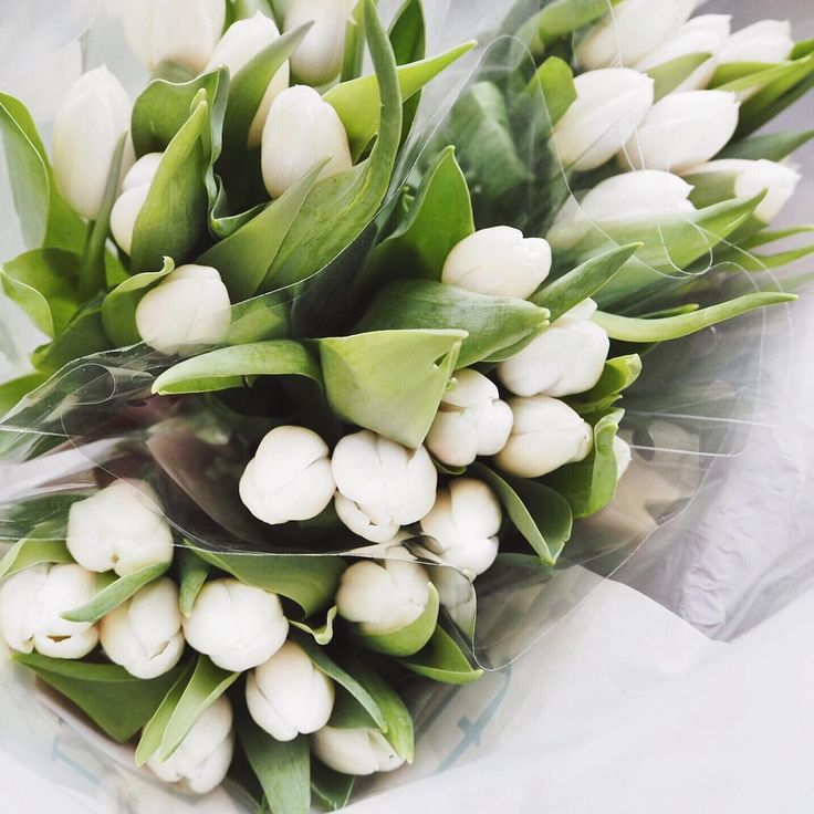Inspirational Quotes On Pinterest: Best 20+ White Tulips Ideas On Pinterest