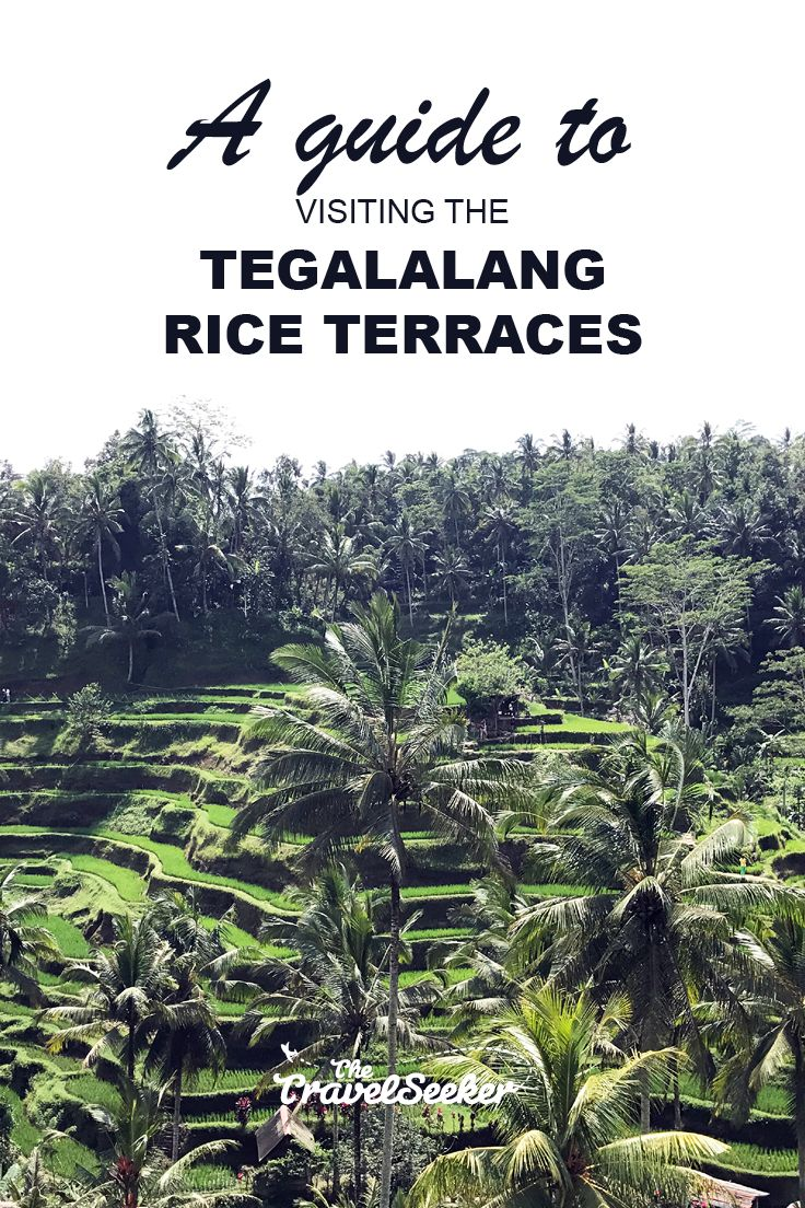 One of the most iconic symbols of Ubud, Tegalalang rice terraces is a must-visit during your stay at Ubud! Here's a quick guide on how to get there.