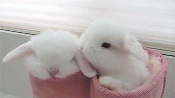 Rabbits in boots cute animals adorable animal pets gifs gif bunny bunnies rabbits