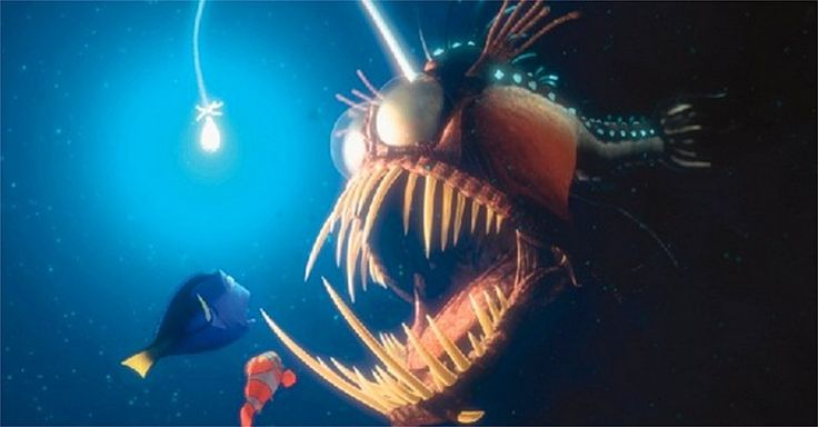 Fascinant: le poisson-pêcheur des abysses filmé pour la prem... - L'avenir