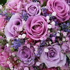 Výsledok vyhľadávania obrázkov pre dopyt fialové kytice