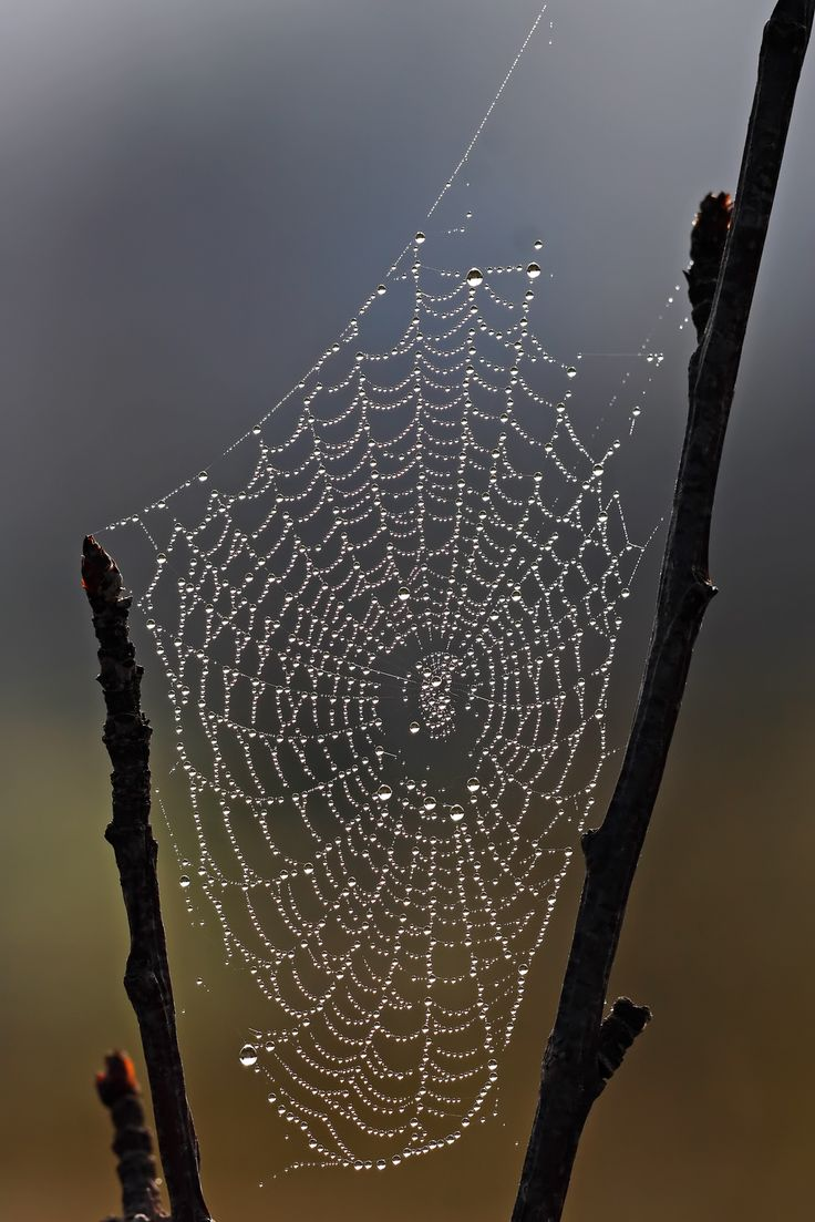 Spider web with dew droplets...simply beautiful!