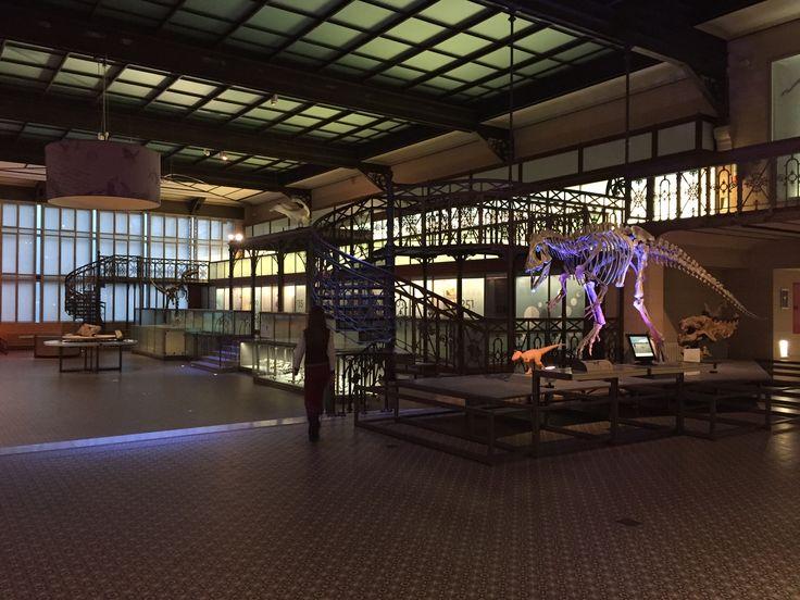 Magnifique surprise que la visite du Musée des Sciences naturelles d'Ixelles. Une véritable bonne idée de visite pour les enfants!