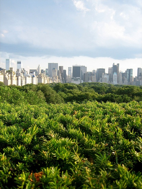 New York skyline as seen from the Met.