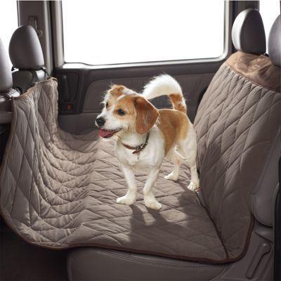 56 besten gus Bilder auf Pinterest   Haustiere, Hunde und Hund katze