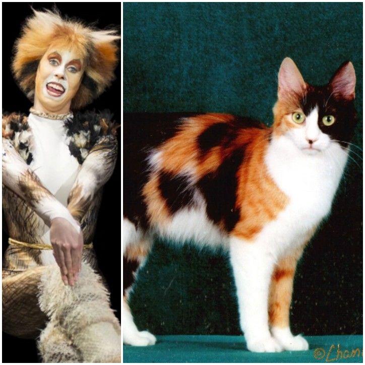 Jellylorum Calico And White Turkish Angora Sister Jennyanydots Jellicle Cats Cats Musical Musical Movies