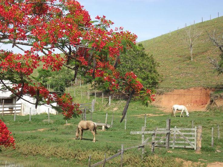 76 best roa images on pinterest plantation houses rustic homes tem gente que to simples que j no necessita de nada para ser feliz fandeluxe Choice Image