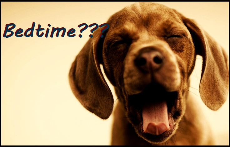 The Modern Dog Boutique 29 S Prospect Ave, Clarendon Hills, IL  #ClarendonHills #hinsdale #downersgrovePuppies Yawning,  Hungarian Pointer, Little Puppies, Funny Dogs, Sleepy Puppies, Pointer, Pets, Dogs Pictures, Animal Funny