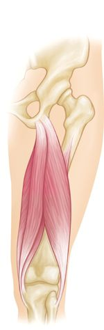Muscle strains usually happen when a muscle is stretched beyond its limit, tearing the muscle fibers.