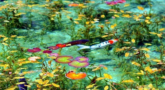 "The pond seems as if it's a picture! ""Nameless pond"" in Gifu Japan is stunningly beautiful…!"