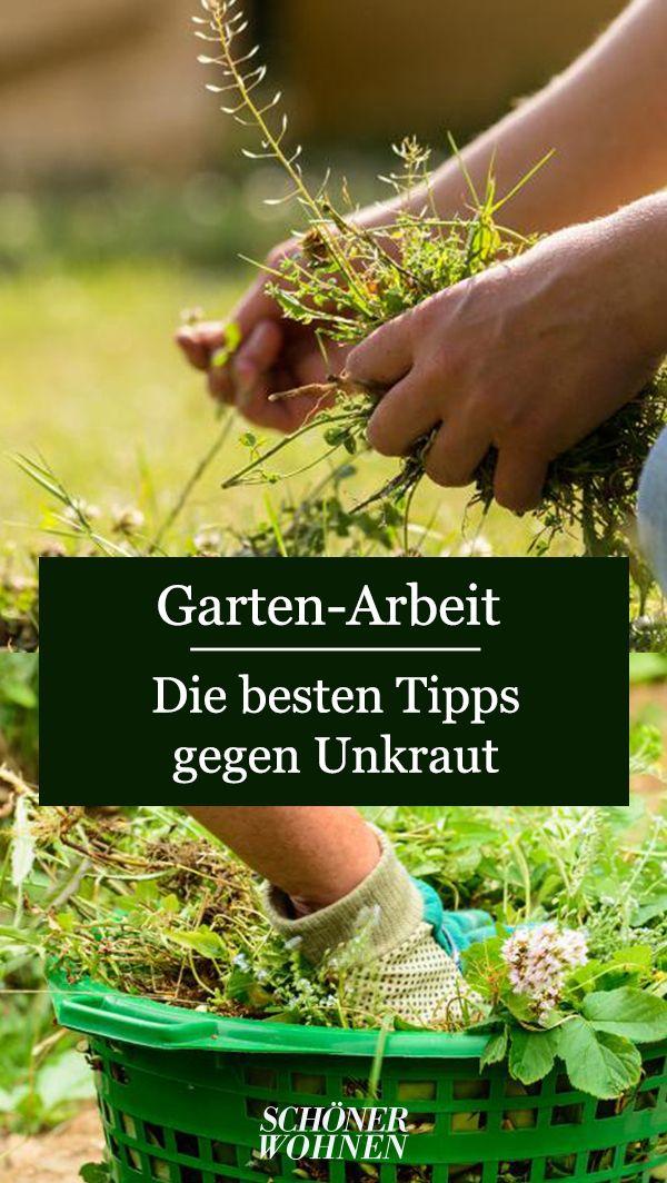 Unkraut Entfernen Tipps Und Tricks Unkraut Entfernen Unkraut Unkraut Im Garten