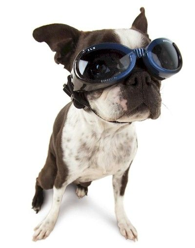 Doggles - besides the fact that they are super cute, Doggles are a good purchase to protect your dog's eyes. They protect against sun, sand, bugs, etc. Great for beach days, and for car rides if your pup likes to stick their head out the window.