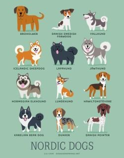 Dogs Of The World: NORTHERN EUROPE: Broholmer (Denmark), Danish-Swedish Farmdog, Vallhund (Sweden), Icelandic Sheepdog, Lapphund (Sweden), Jamthund (Sweden), Norwegian Elkhound, Lundehund (Norway, Hamiltonstovare (Sweden), Karelian Bear Dog (Finland), Dunker (Norway), Danish Pointer.MORE DESIGNS: Finnish Lapphund