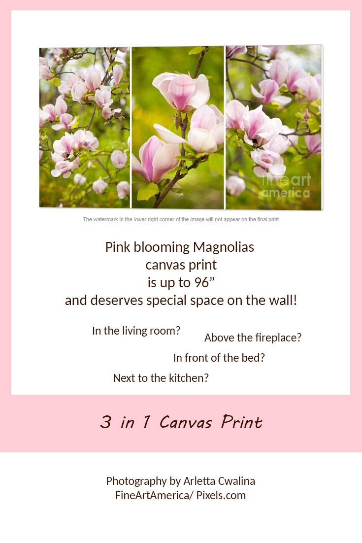 """This triptych canvas is up to 96"""" and it's huge! Pink magnolias flowers macro, beautiful blossoms detail deserves the special place on the wall: in the kitchen, living room, bedroom maybe? And don't forget to choose the side wrap. Photography by Arletta Cwalina/ Fineartamerica. See more clothes and home decor ideas and if you love it, feel free to share, maybe your friends would like to have it too :) #homedecor #canvasprint #magnolia"""