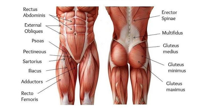 El core se denomina a todos los músculos de la parte central del cuerpo y que son fundamentales para la eficiencia en cualquier deporte que queramos practicar.  A estos músculos también se le…