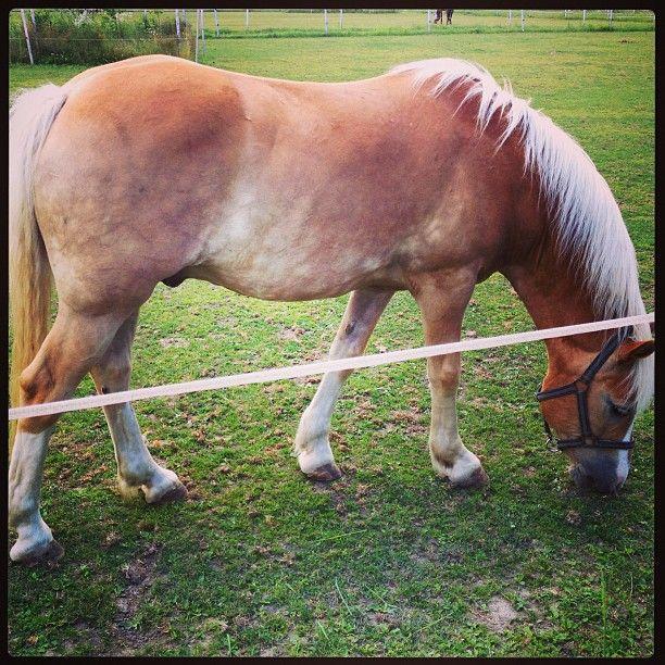 Potkali jsme i pár koní..