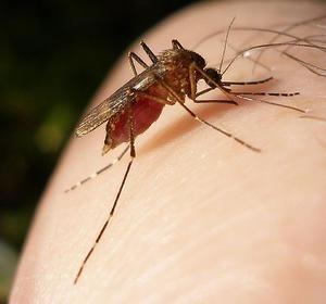 Malaria vaccine breakthrough by Aussie scientists