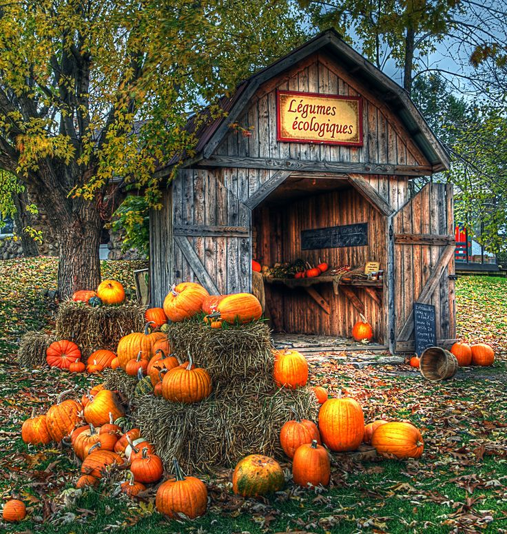 Love those BER months!  September, October, November, and December. I love decorating for fall as much as I do for Christmas.