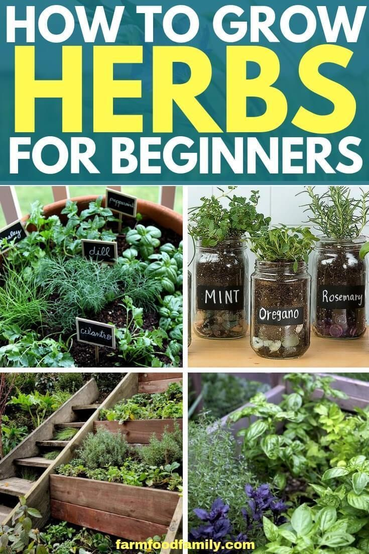 To Start Your Herb Garden Design Process You Ll Need Two Lists