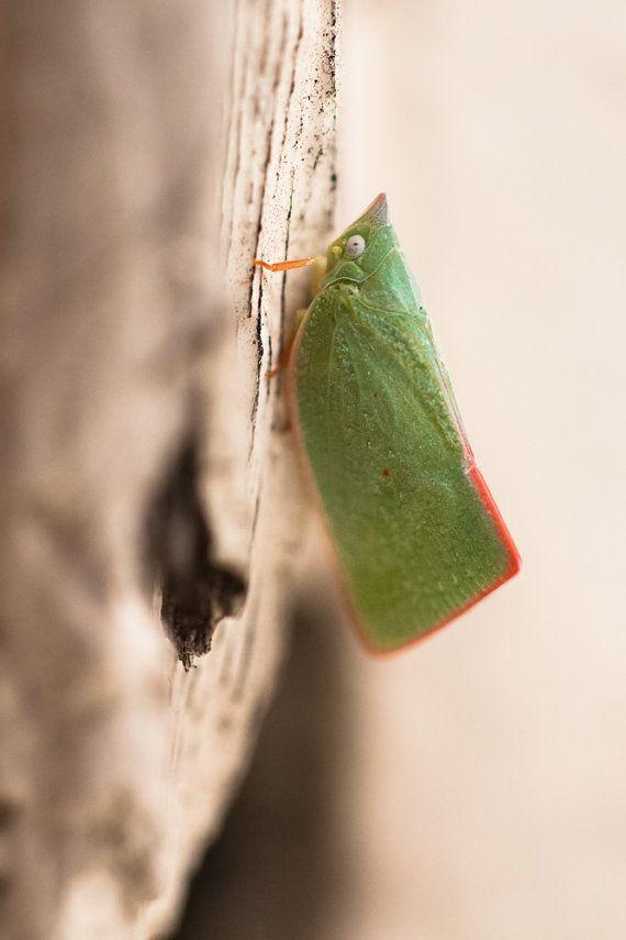 KATYDID - Fine Art Photography - Insect Macro Closeup - Nature Photography - Home Decor - Wall Hanging - Wall Art - Insect - MrMoonshine