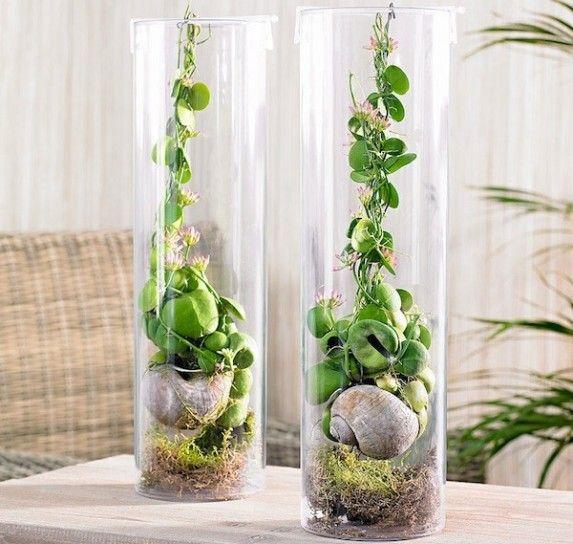 Vasi in vetro trasparente - Vasi in vetro per arredare casa con i fiori e le piante.