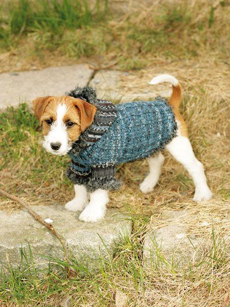 Auch unsere vierbeinigen Freunde leiden im Winter unter der Kälte. Abhilfe schaffen kann ein selbstgestrickter Hundepullover. Hier geht es