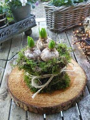 Bekijk de foto van Lily Debie met als titel Hyacinten met een jasje. en andere inspirerende plaatjes op Welke.nl.