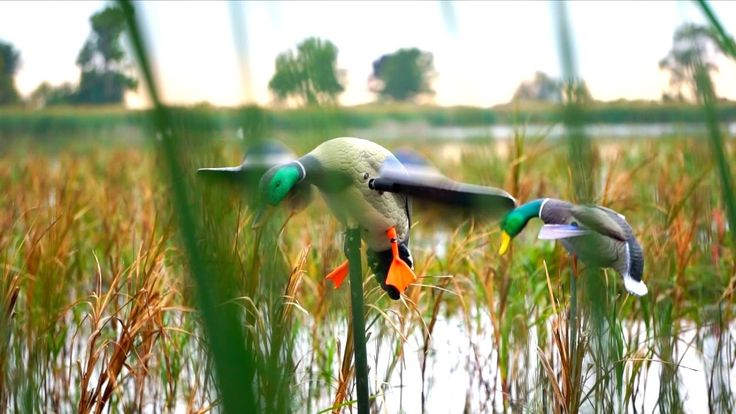 Duck Hunting Opening Day 2016