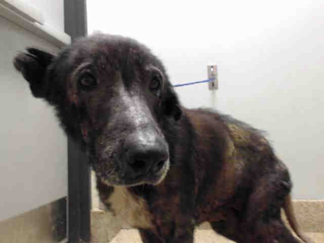 This Poor Pup Will Be Killed Tomorrow If Not Rescued By 1 Pm