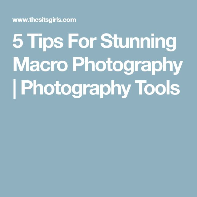 5 Tips For Stunning Macro Photography | Photography Tools