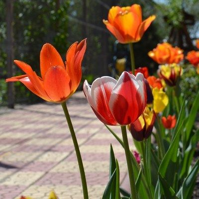 Asculta Spring Cleaning Playlist http://www.zonga.ro/playlist/nazdi5kcmg2ok?asculta&utm_source=pinterest&utm_medium=board&utm_campaign=playlist