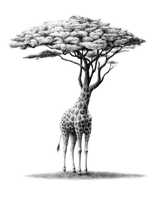 The 25+ best Metamorphosis art ideas on Pinterest