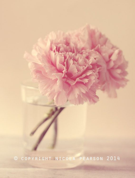 carnation flower photo print  whimsical fine by secretgardentwo, £9.70