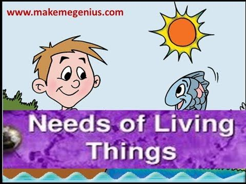 ▶ Needs of Living Things -Animation lesson for Kids - YouTube
