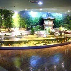 1000 ideas about indoor pond on pinterest indoor for Indoor koi aquarium