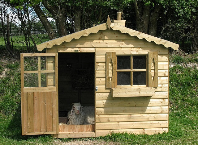 Goat Home