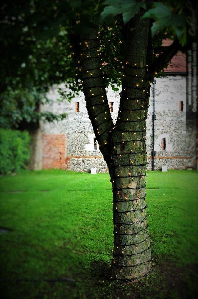 Fairy lights around the tree trunk in the garden #wedding #MonksBarn #barnwedding