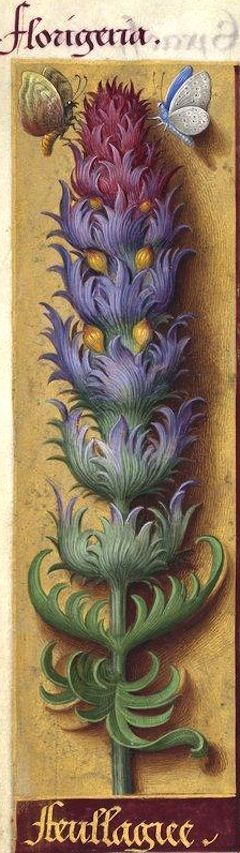 Feullagiee - Florigeria (Melampyrum arvense L. = queue-de-renard, rougeole) -- Grandes Heures d'Anne de Bretagne, BNF, Ms Latin 9474, 1503-1508, f°103v