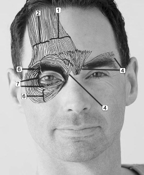 facial action coding system pdf
