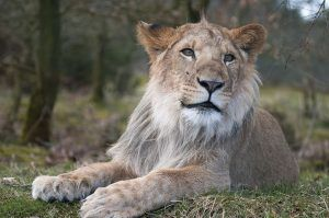 Leonardo DiCaprio Foundation Helps Mountain Lions As Part Of $20 Mill Grant